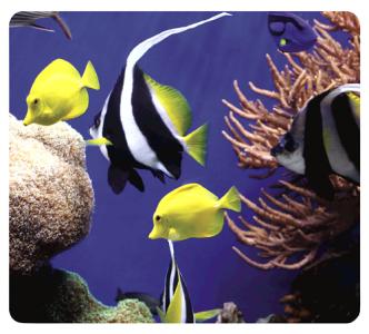 Earth Series™ egéralátét, tengeri halak